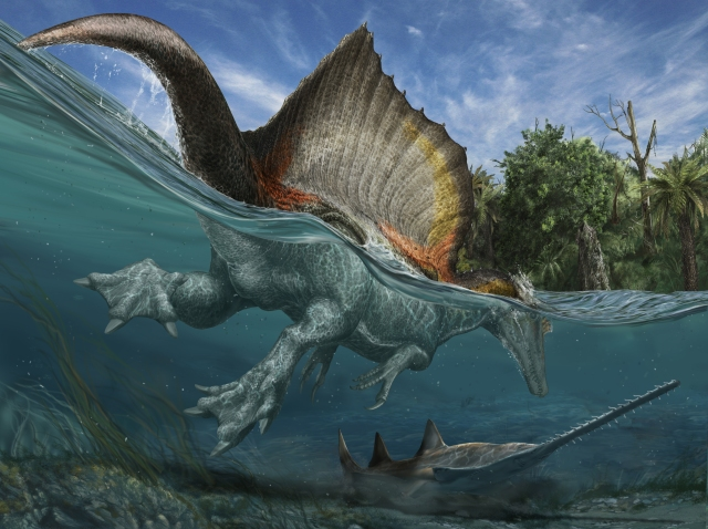 Spinosaurs swims over a sawfish.