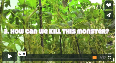 Parasitic Plant video.png.