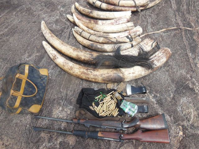 PIC>mozambiquepoaching